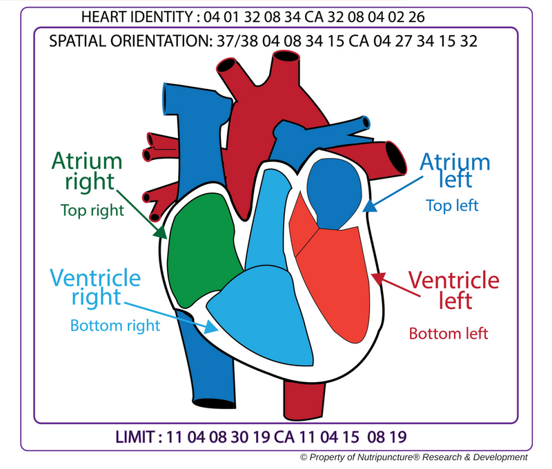 Heart Spatial Orientation_Nutripuncture copyright.png